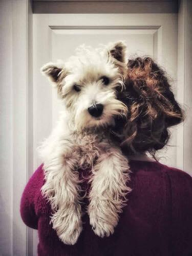 West Highland White Terrier - Valle Celata
